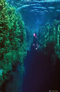 Diver - Piccanninie Ponds Conservation Park SA