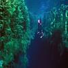 Diver - Piccanninie Ponds Conservation Park<br /> SA