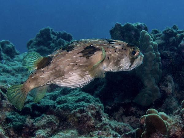 underwater12/28/13