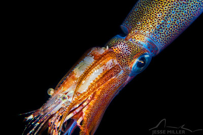 Opalescent Squid - Redondo in Des Moines, Washington