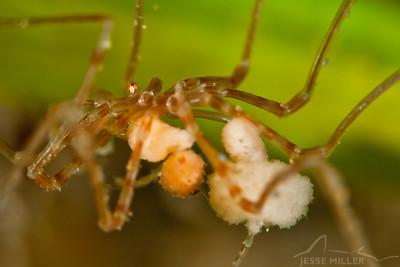 Sea Spider - Alki Junkyard in Seattle, Washington
