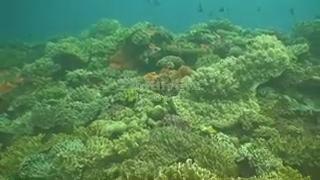 Scenes from Astrolab and King Kong reefs off Kadavu, Fiji.