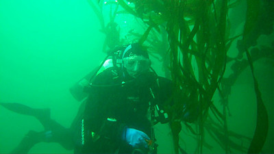 Divers during safety stop on June 27th in the Blackfish Archipelago, Northern Vancouver Island. Divers are Jacqui Engel and Glen Miller. The abundant plantkon is a testimony to the richness of this cold-water marine ecosystem. Jackie Hildering behind the camera.