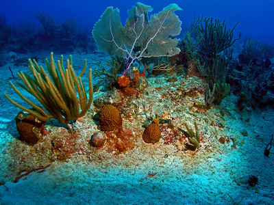 "Virgin Gorda Scuba, Cooper Island ""Thumb Rock"""