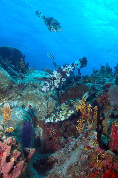 Calf Rock 2012-07-23 - 11-29-31