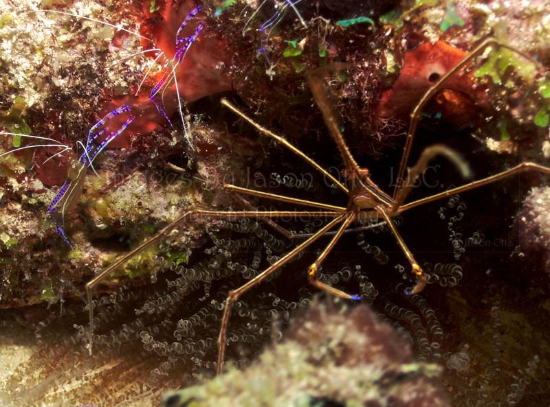Crab and Shrimp Special