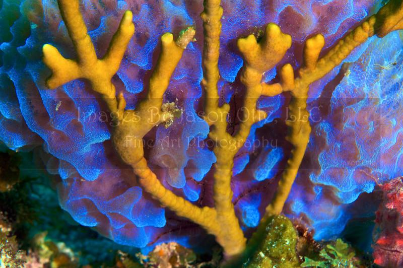 Calf Rock 2009-10-12 - 09-40-28