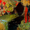 Rhone  2010-07-09 - 11-30-46