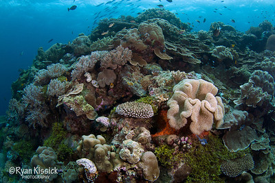 One of Wakatobi's exquisite and extremely healthy coral reefs