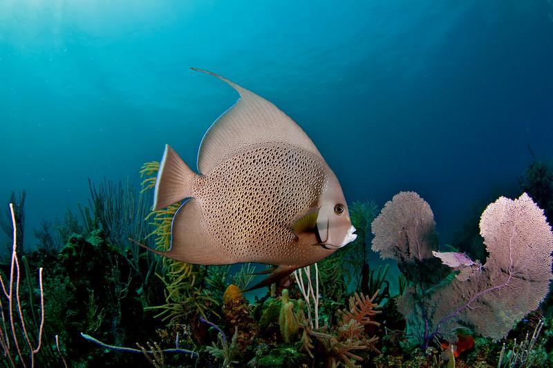 Oceanblue Divers trip to Port Lucaya, Grand Bahama Island, July 2-6, 2011