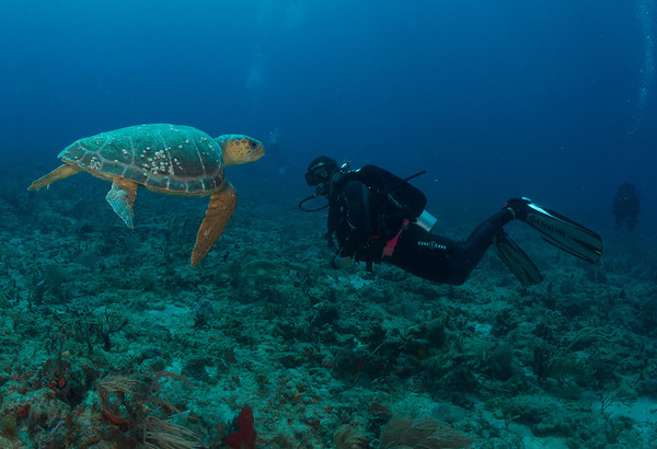 West Palm Diving -- March 2013