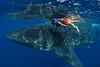 Kieran Liu, age 5, snorkels with a whale shark (Rhincodon typus). Isla Mujeres, Mexico