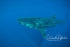 A whale shark swimming 10 feet below the surface.  As more and more boats/snorkelers arrived, whale sharks would often dive and swim just beneath the fray, surfacing again just outside the mass of boats.