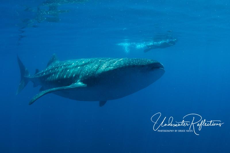 One large swimming companion!
