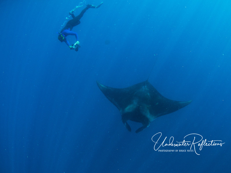 Diving for mantas, which joined us en masse only one of the five days we were there.