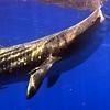 shark - whale 2