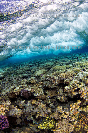 Waves Breaking Over Coral
