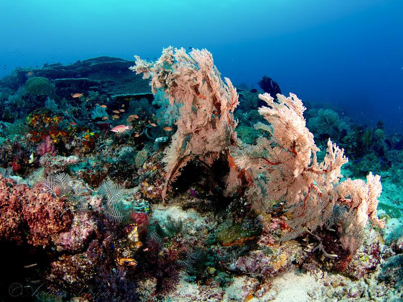 Reef view, Komodo 2013