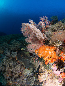 Orange and pink, Komodo 2013