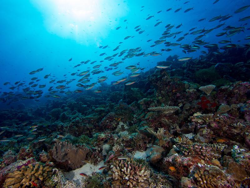 Fisilier & Reef, Maldives 2014