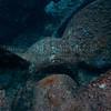 Rhone  2012-07-19 - 10-26-47
