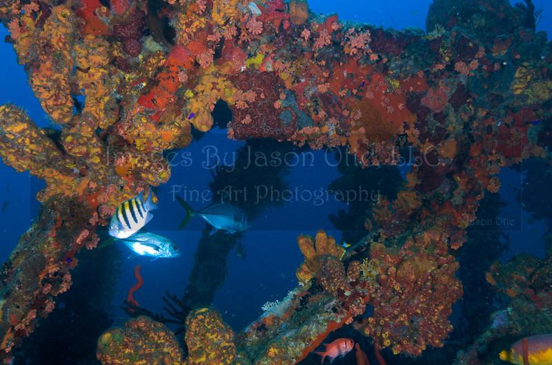 Rhone 2009-10-15 - 11-16-49