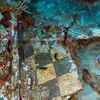 Rhone  2012-07-19 - 10-19-31