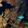 Rhone 2011-07-28 - 12-09-17