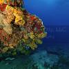 Rhone  2012-07-19 - 10-13-08