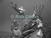 """Diving Bonaire, Netherland Antilles -- A diver swims past the propeller and rudder of the """"Hilma Hooker.""""  (""""Hilma Hooker"""" dive site)  © Rick Collier<br /> <br /> <br /> <br /> <br /> Bonaire; """"Netherlands Antilles""""; Caribbean; tropic; tropical; vacation; destination; scuba; diving; dive; """"scuba diving""""; wreck; """"Hilma Hooker""""; diver; divers; propeller; screw; rudder;"""