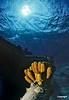 SpongesonWreck_0231