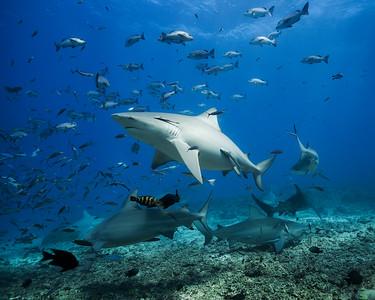 Among the sharks