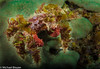Decorator crab. Can you find the eyes?