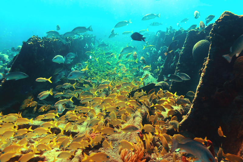 Reef Fish and Shipwreck Landscape