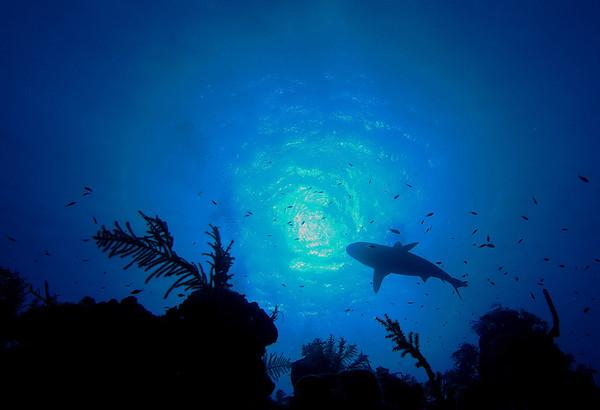 Patrolling the Reef