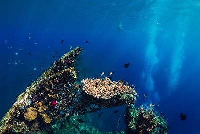 Liberty reef