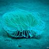 Hair Coral