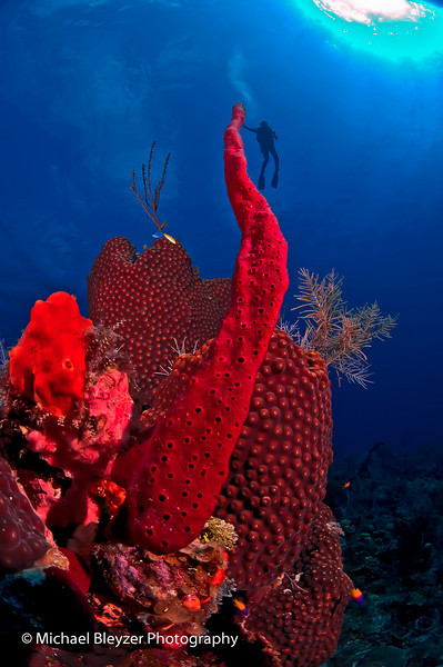 The land of giant corals.