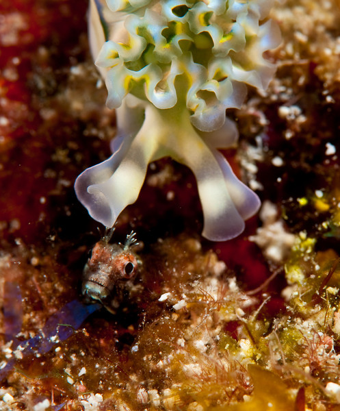Nudi and goby