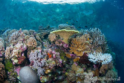 Beuatiful Corals with surface reflection