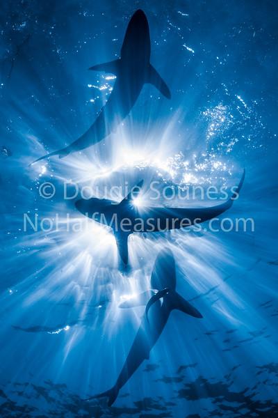 Underwater big stuff (Sharks, Mantas, Crocs etc.)