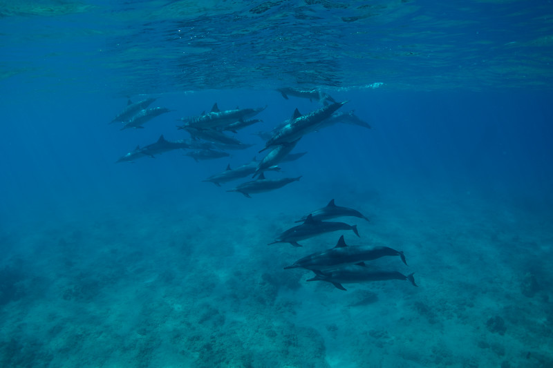 I can't swim as fast as a dolphin