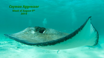 Cayman Aggressor August 2014