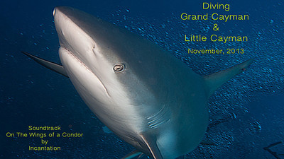 Diving Grand Cayman & Little Cayman 11-13