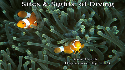 Sites & Sights of Diving
