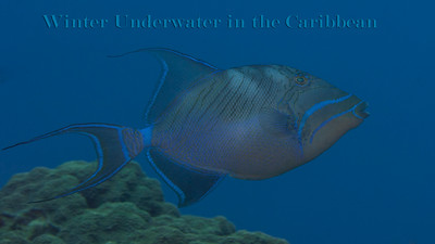 Winter Underwater in the Caribbean 2014