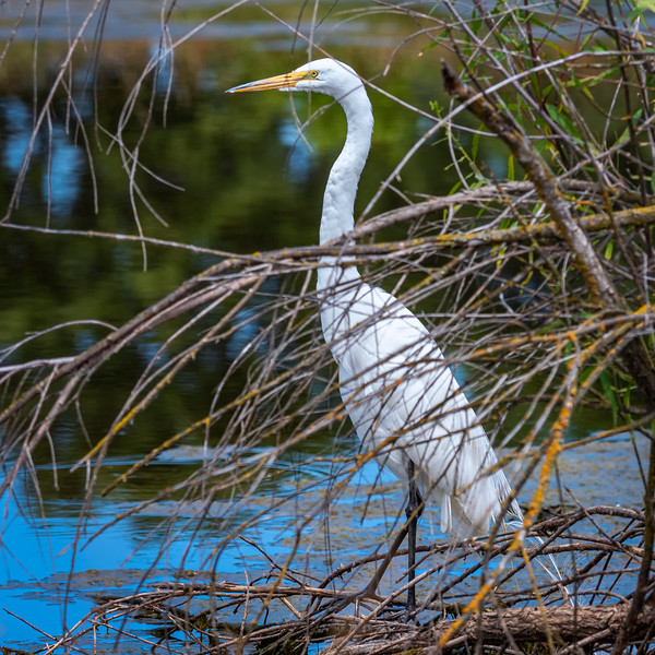"""egret""""/"""