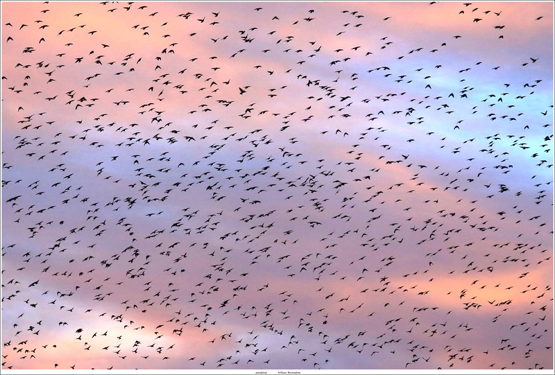 Flock of Birds (unedited)