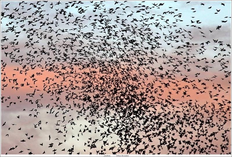 Flock of Birds (unedited)