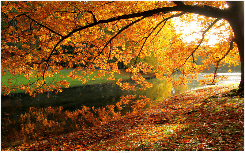 Autumn in Netherlands